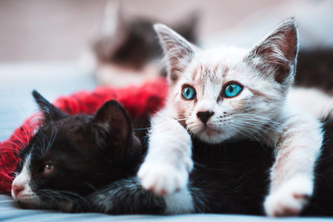 chat-maison