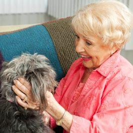 senior et chien