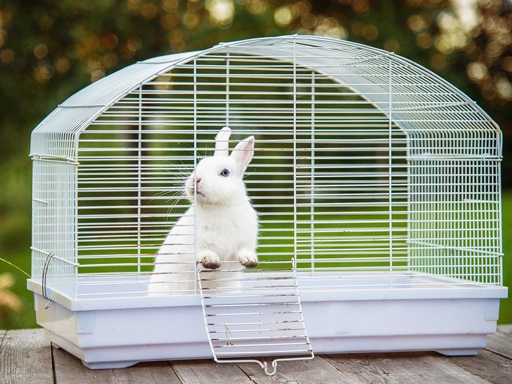 cage pour son lapin